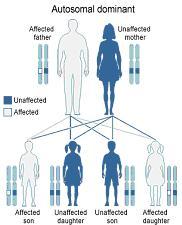 grafico ereditarietà